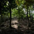 東京世田谷、等々力渓谷の竹林の丘
