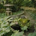 Photos: 緑の王国