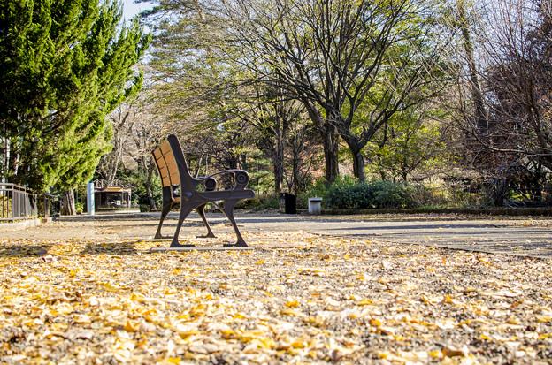 紅葉の絨毯上のベンチは晩秋を楽しんでるか