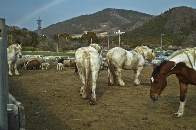 馬のケツを観察していたらその向こうに虹が!