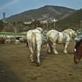 Photos: 馬のケツを観察していたらその向こうに虹が!