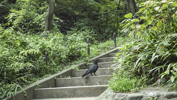 Photos: 烏のお参り(爆)