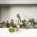 Photos: 植物たちの舞台