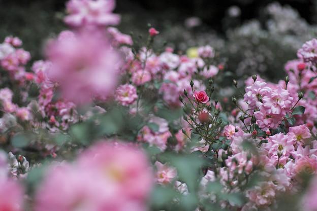 ピンクのヒロイン