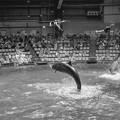 写真: イルカと一緒にジャンプ!2@EPSON品川アクアスタジアム13