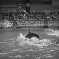 写真: イルカと一緒にジャンプ!3@EPSON品川アクアスタジアム14