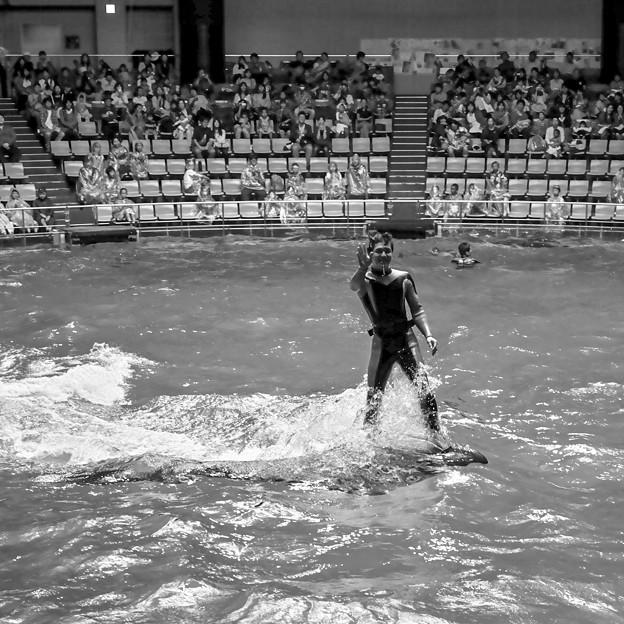 イルカに乗った青年@EPSON品川アクアスタジアム15