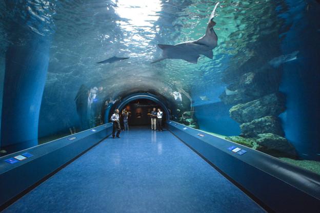 Photos: トンネルは錯覚の空間@EPSON品川アクアスタジアム-20