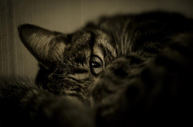 スナイパーの目
