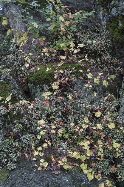 Photos: 蔦の滝
