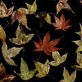 Photos: 秋の色彩
