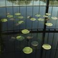 Photos: 円と反映