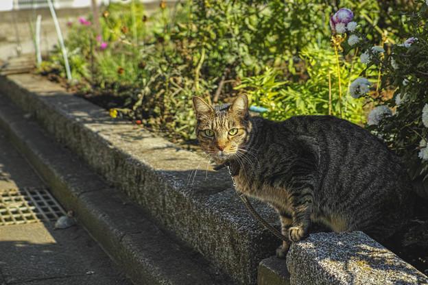 陽の当たる猫の顔