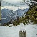 Photos: 眠り雪だるま