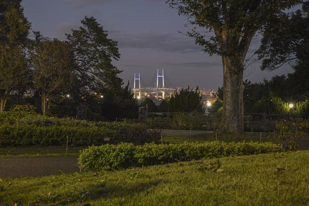Photos: 横浜山手のイギリス館の裏の薔薇園からベイブリッジをのぞむ
