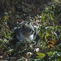 Photos: 佇む野良猫さん