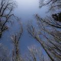 威嚇する樹木達