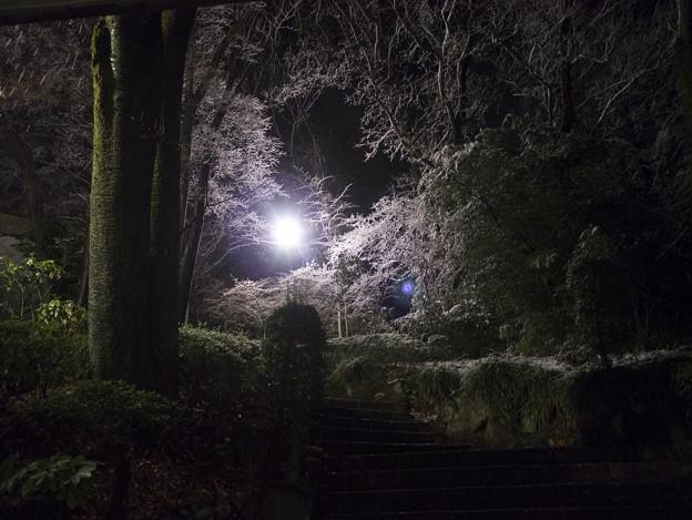 母校の大学に行ったら一足早く桜を観たかと、、、
