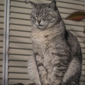 ご近所猫の朝の瞑想