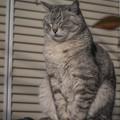 Photos: ご近所猫の朝の瞑想