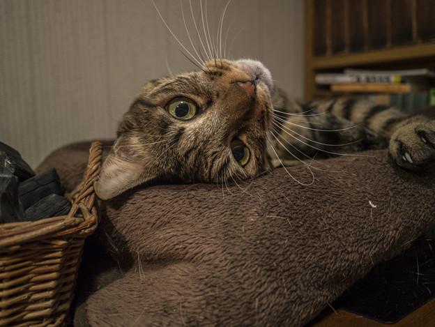 猫は良いね、そういう姿勢取るだけで可愛いって思われるから