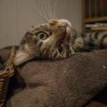 Photos: 猫は良いね、そういう姿勢取るだけで可愛いって思われるから