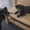 Photos: 里親捜し@ボーダーコリーと紀州犬の合いの子3