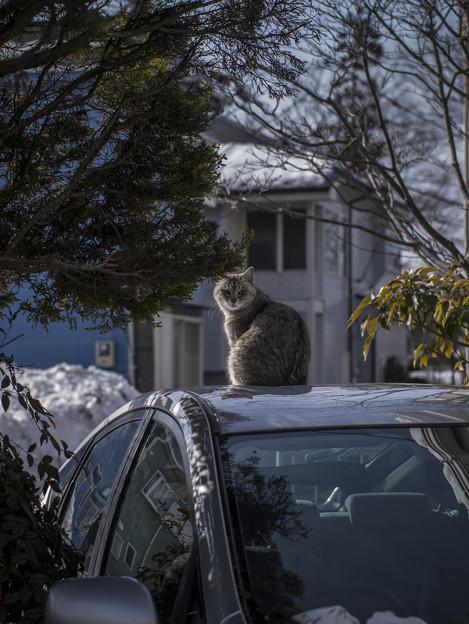 Photos: 見返り美人(猫)