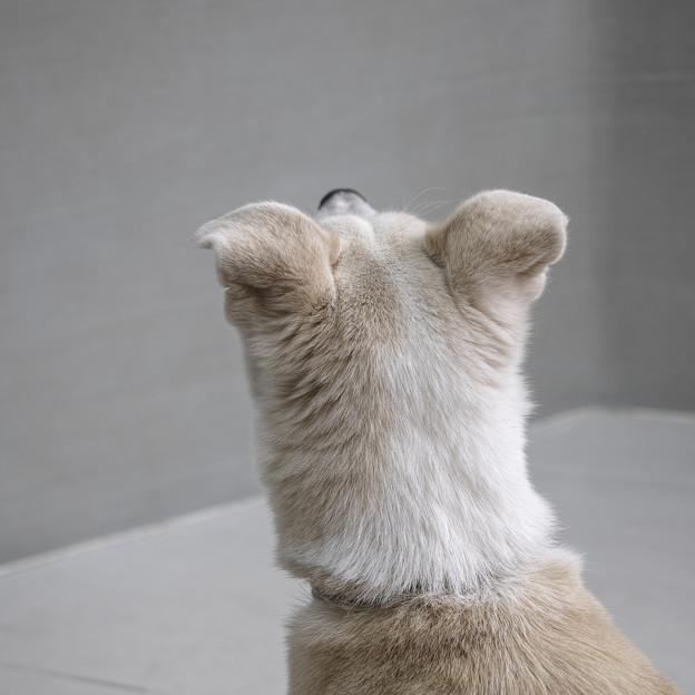 耳の後ろの部分好き
