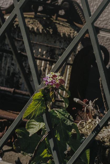 脱獄を試みる花