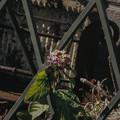 Photos: 脱獄を試みる花
