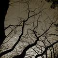 Photos: 魔法の林