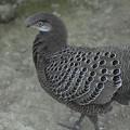 写真: リーゼント鳥(爆)