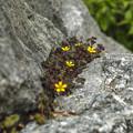 写真: 岩上の根性植物