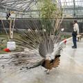 Photos: 気合い入れて羽根を拡げてもみんな無関心、、、