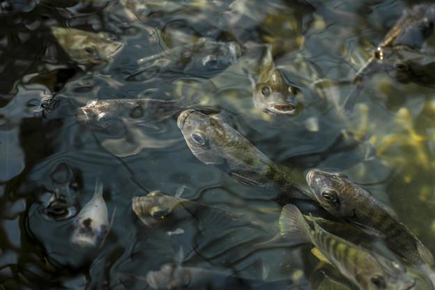 ほら、足を早く水の中に入れてみろよ!