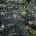Photos: ほら、足を早く水の中に入れてみろよ!