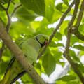 Photos: 緑の国の人