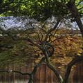 Photos: 秋みたいだ