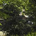 東京都杉並区を流れる善福寺川で散策する