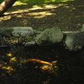 木漏れ日の中を泳ぐ