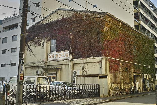 Photos: 蔦のグラデーションが綺麗