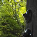 新緑を見つめる扉