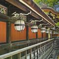Photos: 深緑の中のぼんぼり@京都北野天満宮