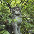 写真: 新緑の中から狛犬さんが現れた