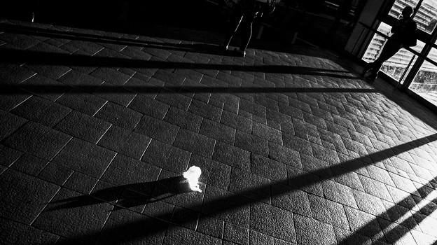Photos: ビニール袋も被写体になるものだ(爆)