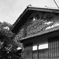 Photos: 浸食