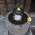 カメラ目線@直立水浴狸とアヒルたち