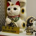 Photos: 金色の招き猫
