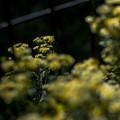 Photos: 暈けの波間に咲く花